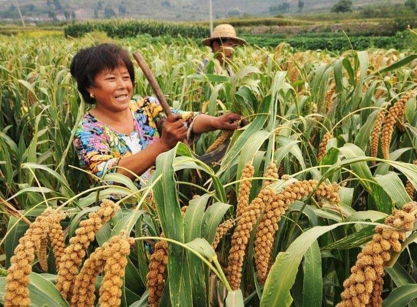 کشاورزی در چین