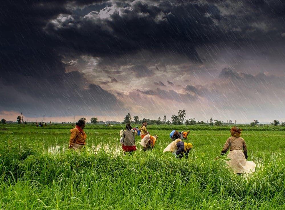 کشاورزی در هند