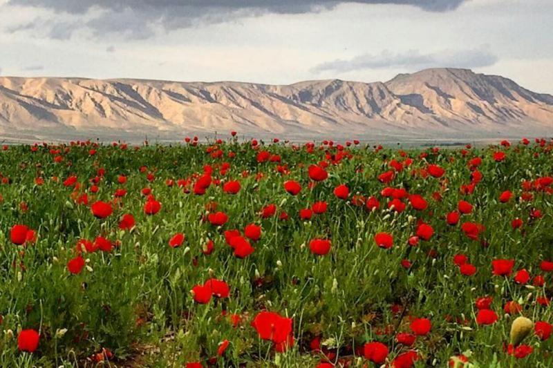ویلا شهریار