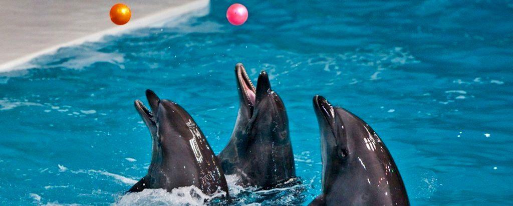 دلفین های دلفیناریوم کیش